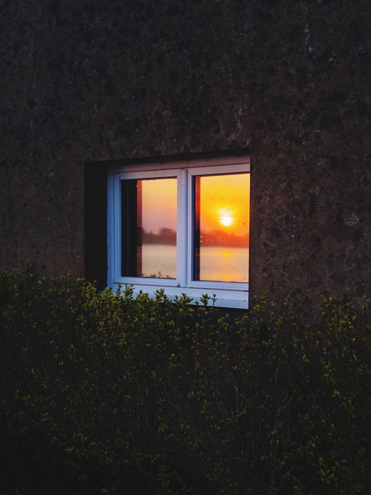 plant, window, architecture, sunset, built structure