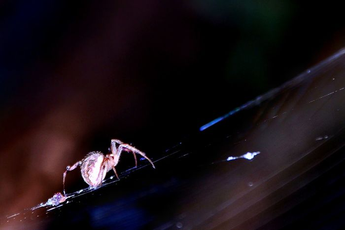 spider in night Flash Night Eight Legs Animal Spider Spider Web No People Night Close-up Outdoors Fragility Nature