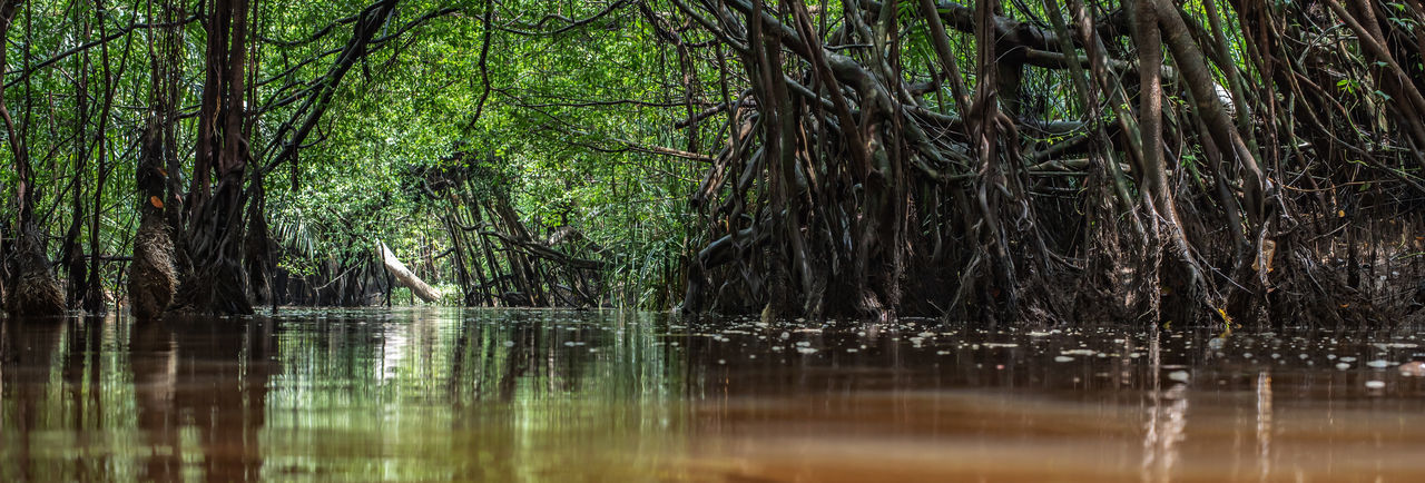 Little Amazon Thailand Jungle Travel Forest Tree Canal Nature Green Boat River Beautiful Canoe Water Outdoor Tropical Phang NGA Klong Nae Summer Adventure Sung Background Takuapa ASIA Palm Tourism Vacation Landscape Mangrove Trip Root Wild Plant Lifestyle På Takua Leisure