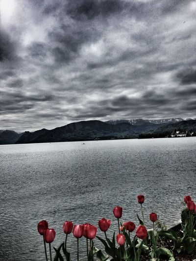 Travelphotography Traunsee Hello From Traunsee