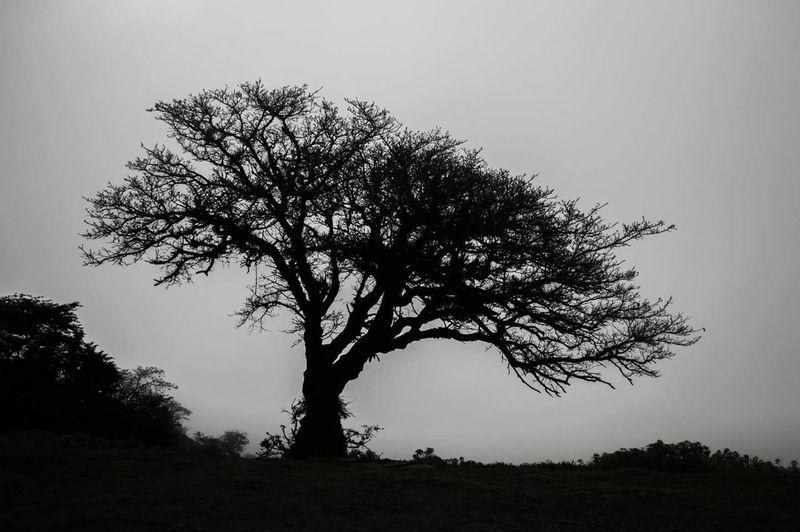 Trees And Sky Single Tree Mystery Beauty In Nature EyeEmNewHere