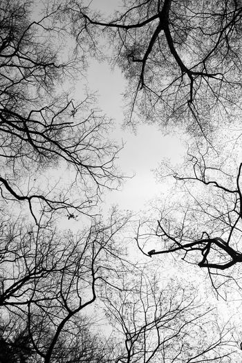 tangle Bare Tree Black And White Branch Cold Dry Forest Korea Low Angle View Monochrome Natural Tangle Travel Tree Tree Trunk Wine