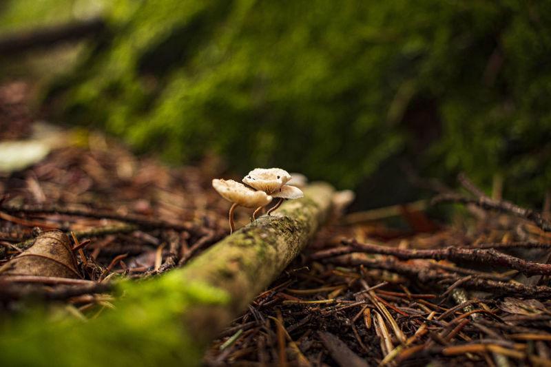 Close-up of small mushroom growing on field
