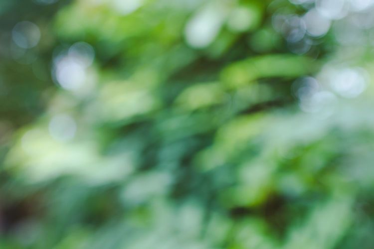 Backgrounds Beauty In Nature Close-up Day Defocused Focus On Foreground Freshness Full Frame Green Color Growth Nature No People Outdoors Plant Plant Part Scenics - Nature Selective Focus Sunlight Tranquility Tree