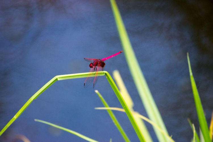 Close-up of dragonfly perching on plant
