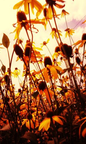 Kwiatki C: Hehe ☺