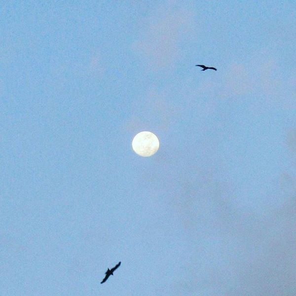 Eagles flying high circling around the full moon on the auspicious occasion of Buddha Purnima happening tomorrow 21.05.16 Om mani padne hum....recite this mantra for invoking power within. Buddhapornima Eagles Fullmoon Gratitude Cosmicexplorer @photographers_of_india @dombivli_ig @iglobalphotographers