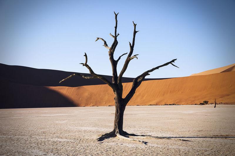Sand Dunes at Soussevlei, Namib Desert, Namibia Africa African Arid Climate Bare Tree Beauty Of Decay Contour Dead Desert Dry Dunes Hot Landscape Mountain Namib Desert Namibia Orange Peaceful Remote Sand Sand Dune Sand Dunes Sunrise Sunshine Travel Tree