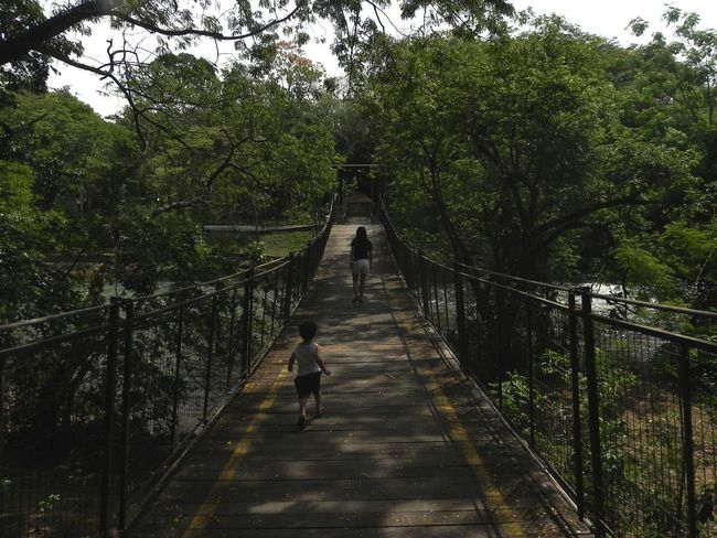 Bridge - Man Made Structure Darkness And Light Forest Kid Lines Walking Over A Bridge