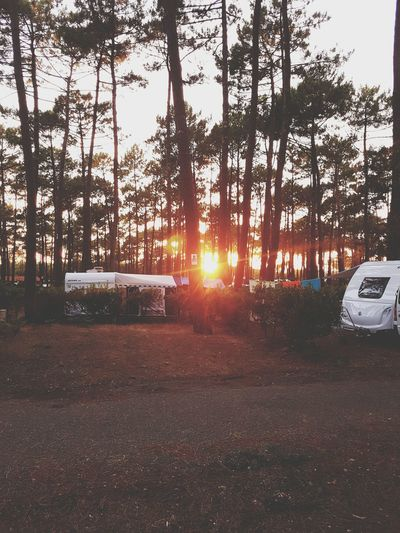 We arrived :) Tree Car Camping Campinglife Wood Sky Outdoors Sunset Nature Let's Go. Together. Been There. EyeEmNewHere Lost In The Landscape Perspectives On Nature Colour Your Horizn
