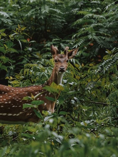 Side view portrait of deer standing by plants in forest