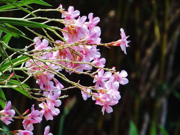 BLOOMING BLOSSOMS... FLORA... PALE PINK FLOWERS... BEAUTY IN NATURE... Beauty In Nature ❤️❤️ Floral Pattern Flora Pale Pink Plant Beauty Plant Flower Branch Pink Color Tree Close-up Plant Life Blooming Petal In Bloom Flower Head A New Beginning
