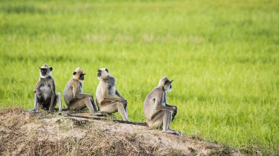 View of monkey sitting on field