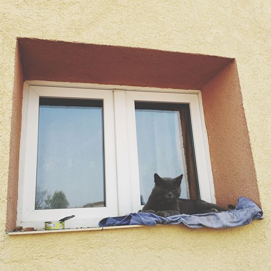 EyeEm Selects Domestic Cat Window Pets Cat Architecture Built Structure Building Exterior Domestic Animals Door House No People Day Feline One Animal Animal Themes Mammal Sitting Outdoors Sky