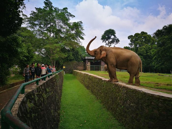 Elephant Animal Animal Wildlife Outdoors Nature Animal Themes Zoo Tree Mammal People Day Grass Adult Animal Trunk Sky The Great Outdoors - 2017 EyeEm Awards INDONESIA