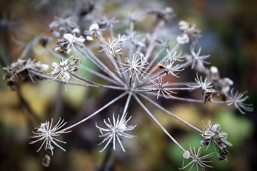 A wonderful happy day everyone Photography Focus On Foreground Plant Close-up Fragility Flower Head Nature Beauty In Nature Change Autumn Flower Seeds