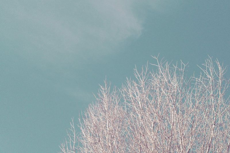 Low Angle View Nature Outdoors Day Tree Growth Sky Beauty In Nature Clear Sky Branch Bare Tree