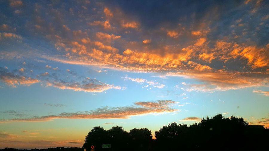 Tree Sunset Forest Tree Area Silhouette Pinaceae Sun Dramatic Sky Sky Cloud - Sky