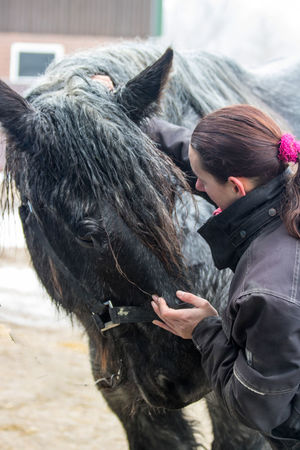 Black Horse Examination Gray Horses Hands Backache Equine Horse Osteopathy Physical Activity Theraphy Working Animals