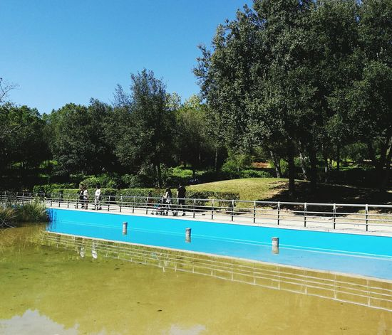 Water Tree Swimming Pool Blue Reflection Sky Sunlight Swimming Tranquility Nature Outdoors No People Tranquil Scene Day Floating On Water Beauty In Nature Refraction Pedal Boat Swimming Lane Marker Water Slide EyeEmNewHere