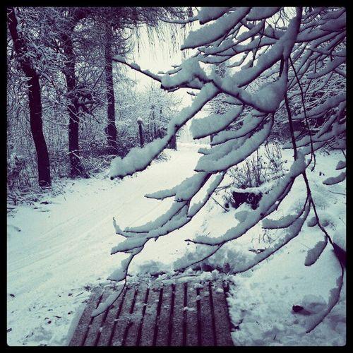 #snow Snow