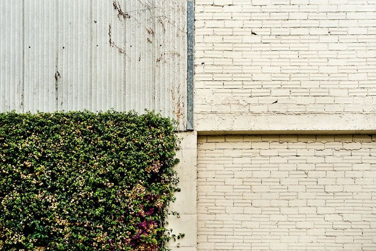 Quadrants Symmetry Order Open Edit Color Composition No People Wall Ivy Balance Abstract