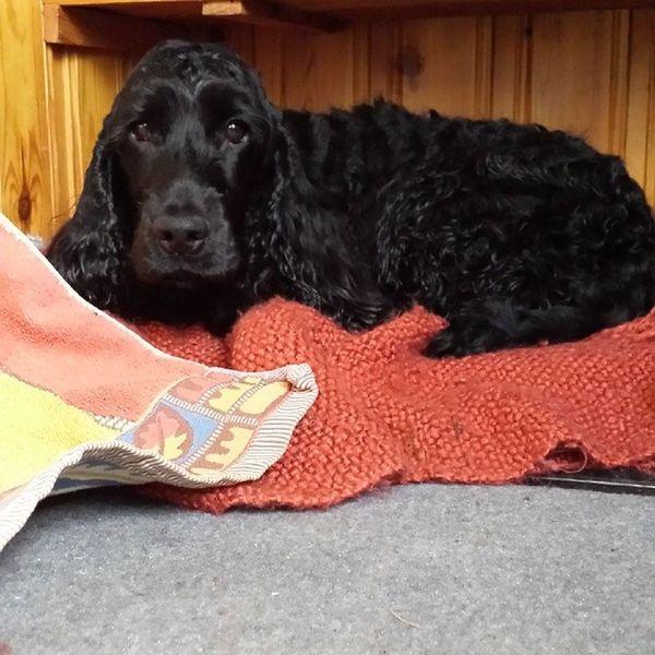 Hund rullad i gud vet vad= glad hund, nybadad hund = ledsen hund