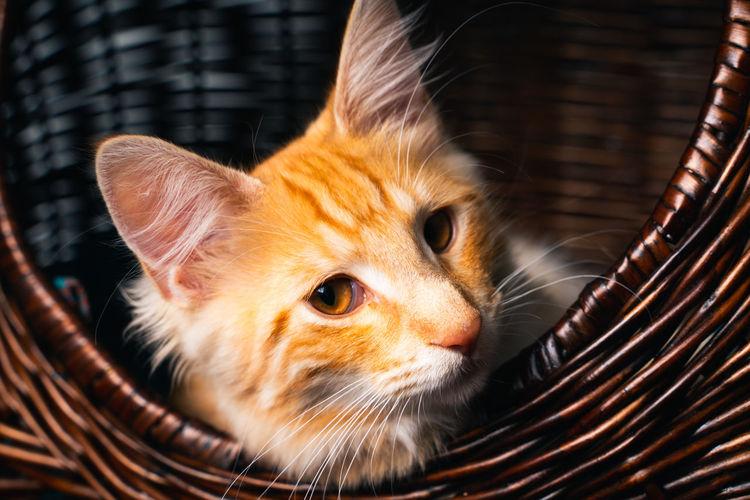 Close-up of kitten in basket