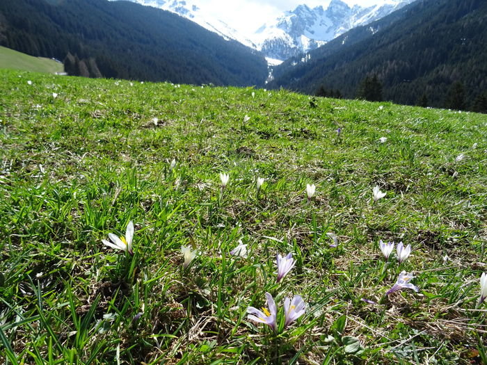 Springtime Tirol  Plant Beauty In Nature Mountain Growth Flower Land Grass Flowering Plant Tranquility Field Green Color Tranquil Scene Nature Day Landscape No People Environment Scenics - Nature Freshness Mountain Range Outdoors