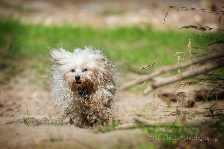 Dog One Animal Domestic Animals Pets Animal Themes Looking At Camera Day Animal Head  Germany