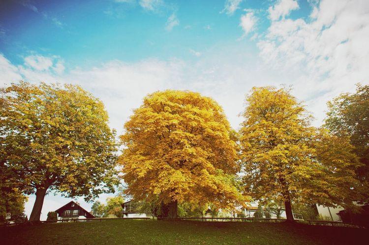 Autumn Clara Filter Colors Of Autumn Trees