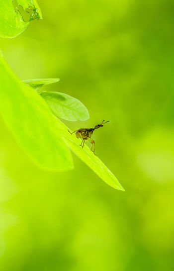 Animal Themes Animal Wildlife Animals In The Wild Beauty In Nature Close-up Day Fragility Green Color Insect Leaf Macro Nature No People One Animal Outdoors Plant