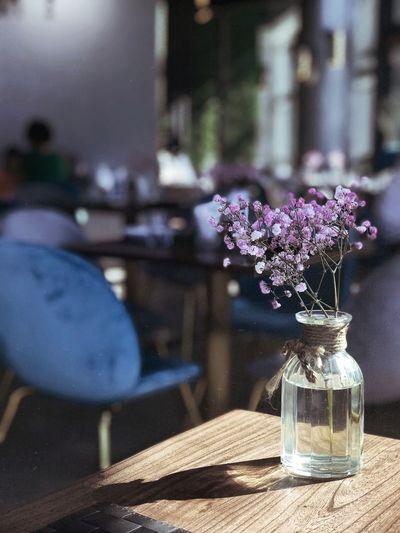 flower Flower Flowering Plant Vase Plant Table Freshness Glass - Material Bottle Indoors  Jar Purple