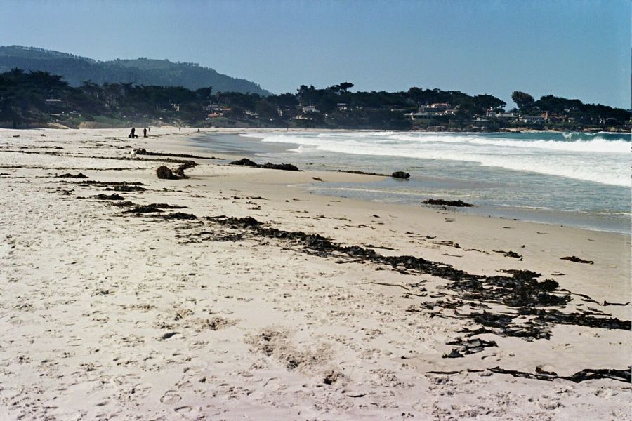Carmel-by-the-sea Beach Sea Sand Wave Surf Film Zenit122 Ektar100 Koduckgirl Carmel Beach Kelp