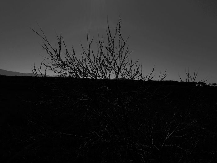 Nature spirit Black Background Horizon Over Land Plant Photography Naturesbeauty Bnw_of_our_world Blackandwhite Photography Bnw_of_our_world Blancoynegro Bnwphotography Wild Nature Shadows And Silhouettes Silouette And Shadows Branch Landscape Growing Wilted Plant
