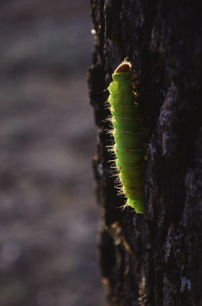 Beauty In Nature Catterpillar Close-up Day Focus On Foreground Green Color Growth Insect Nature No People Outdoors Tree Trunk