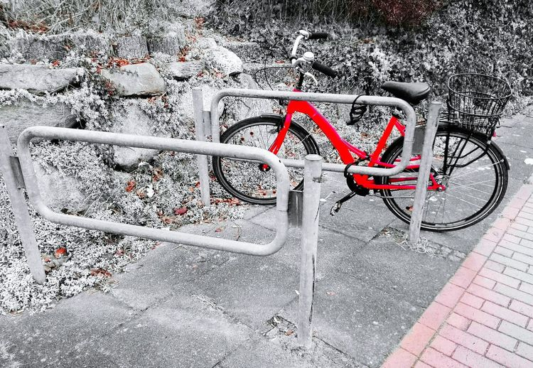 Check This Out a Bycicle alone in Black And White With A Splash Of Colour Red Outdoors No People Day Eye4photography  Bycicle Photography Bycicle Unites Bycicle Lovers Bycicle Art Bycicles Bycicle Parking Fresh On Eyeem  Mobility In Mega Cities