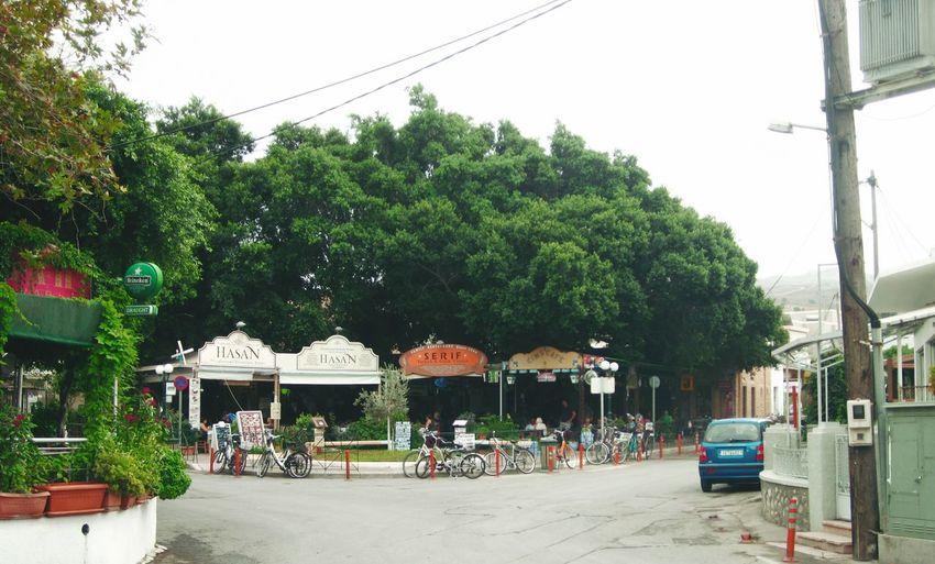 🇬🇷🇹🇷 (lovely) turkish village on KosTurkish Lifestyle in Platani Kos Island Plaza Turkish Village Trees In A Row Green Green Green!  Lush Foliage Lushness Hugging A Tree Main Plaza Kos, Greece Village Life Restaurants In Summer