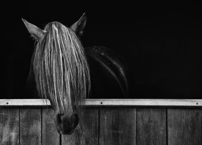 Let Your Hair Down Horse hippie 2 Original Experiences Monochrome Photography My Year My View BYOPaper! Pet Portraits Black And White Friday Inner Power