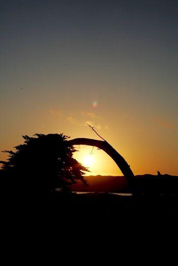 Tadaa Community EyeEm Nature Lover Sunset Silhouette flexible tree.