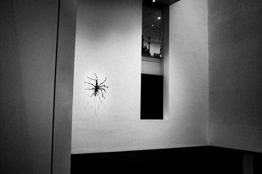 Big Spider Animal Themes Arachnophobia Architecture Close-up Creepy Day Illuminated Indoors  Insect No People One Animal Spider Window