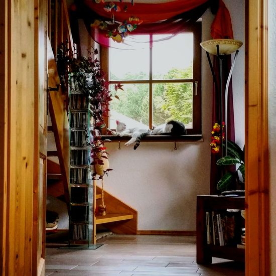 EyeEm Selects Cats Of EyeEm Home Sweet Home Home Is Where My Cat Is Naptime Home Cat Home Interior