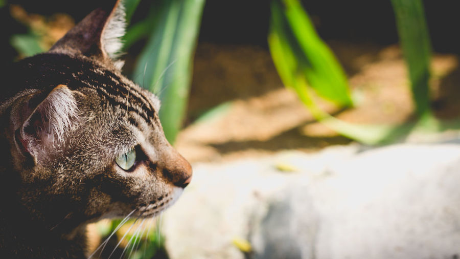 A cat visitor Alertness Animal Animal Body Part Animal Eye Animal Head  Cat Close-up Day Domestic Cat Feline Focus On Foreground Green Color Mammal Nature No People Outdoors Part Of Portrait Selective Focus Whisker The Great Outdoors - 2018 EyeEm Awards