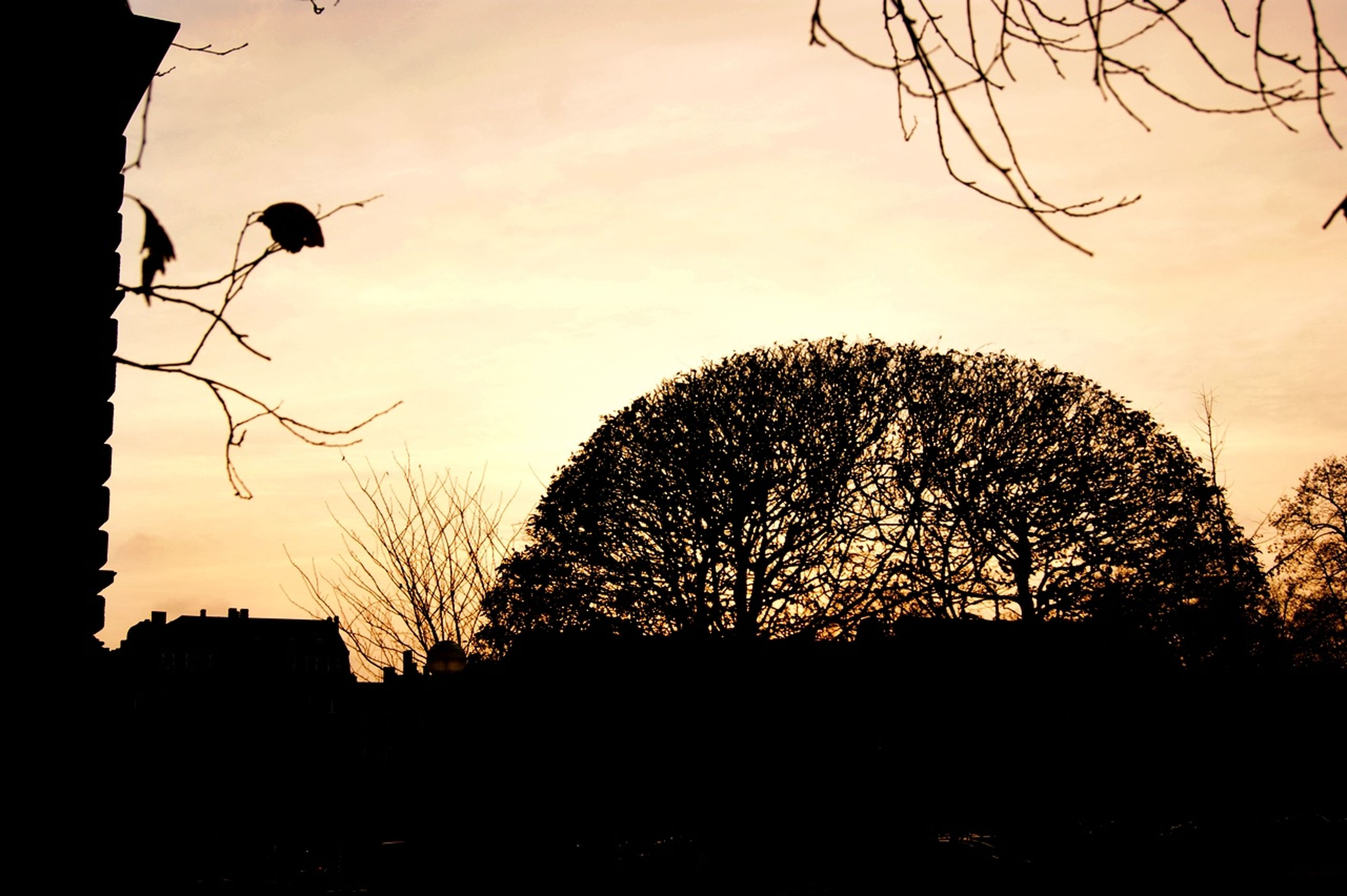 silhouette, sunset, bare tree, sky, tree, branch, low angle view, nature, orange color, built structure, tranquility, building exterior, beauty in nature, architecture, scenics, dusk, cloud - sky, growth, outdoors, no people
