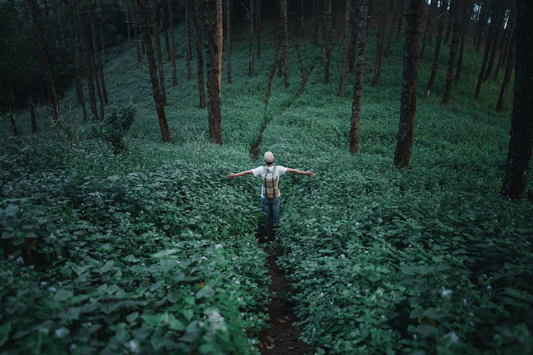 In the dark forest Wild tourist Fog and trees Plant Land Forest Tree One Person Nature Limb Human Arm WoodLand Standing Day Growth Green Color Freedom Full Length Tree Trunk Adult Trunk Arms Outstretched Outdoors Arms Raised Human Limb 2018 In One Photograph