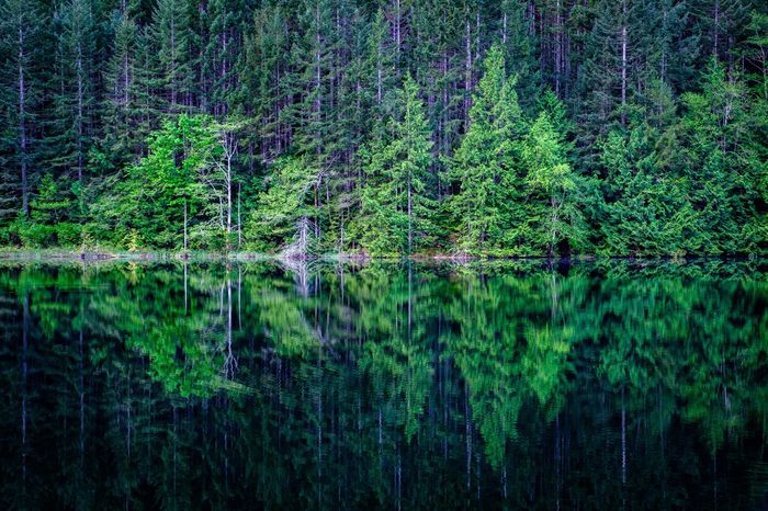 Brohm Lake Treereflectiononwater Green Color Plant Growth No People Backgrounds Full Frame Foliage Lush Foliage Beauty In Nature Nature Outdoors Tranquility Scenics - Nature Landscape