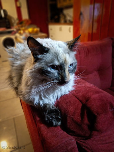 Cat looking away while sitting on sofa