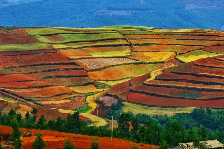 Yunnan China Photos Landscape_photography Landscape_Collection China Terraced Field Multi Colored Rural Scene Agriculture Pattern Field Landscape Patchwork Landscape Cultivated Land View Into Land Agricultural Field Plantation Farm Rice Paddy Rice - Cereal Plant