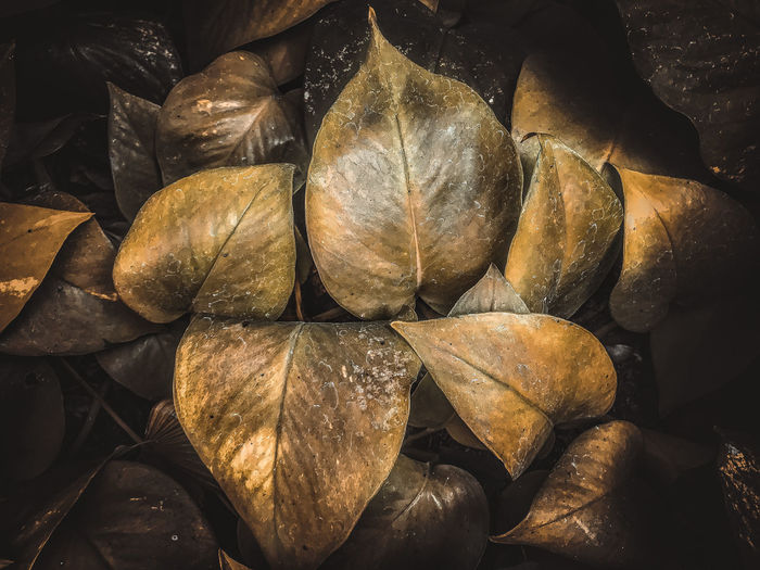 Abundance Leaves Day Plant Dry Brown Backgrounds Plant Part Leaf Full Frame No People Nature Close-up Large Group Of Objects Still Life Freshness Outdoors Change Food And Drink Sunlight Dried