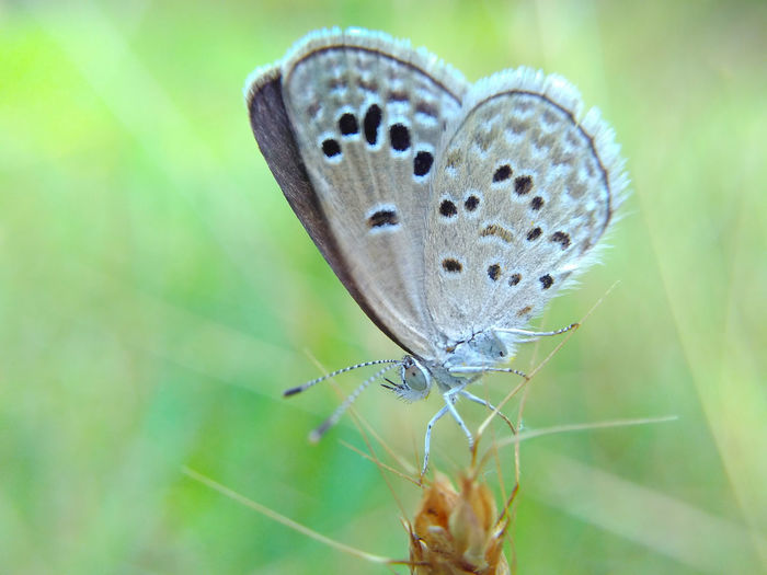 Macro Butterfly Nature Insect Animal Beauty In Nature Outdoors Close-up Nature